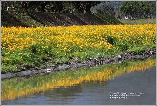鳳林溪水岸黃波斯-2021-02-05.jpg