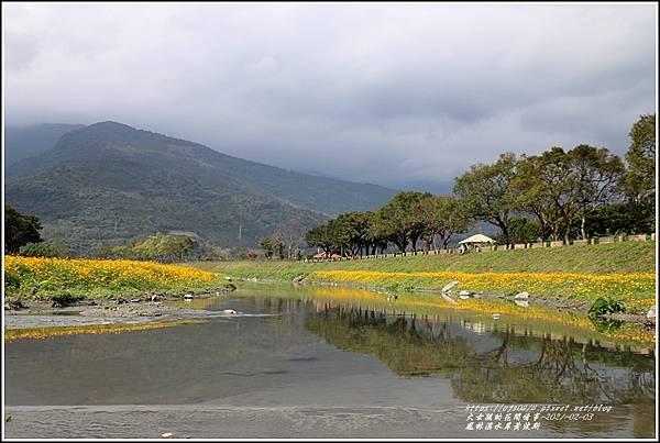 鳳林溪水岸黃波斯-2021-02-08.jpg