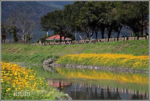 鳳林溪水岸黃波斯-2021-02-13.jpg