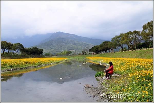 鳳林溪水岸黃波斯-2021-02-24.jpg