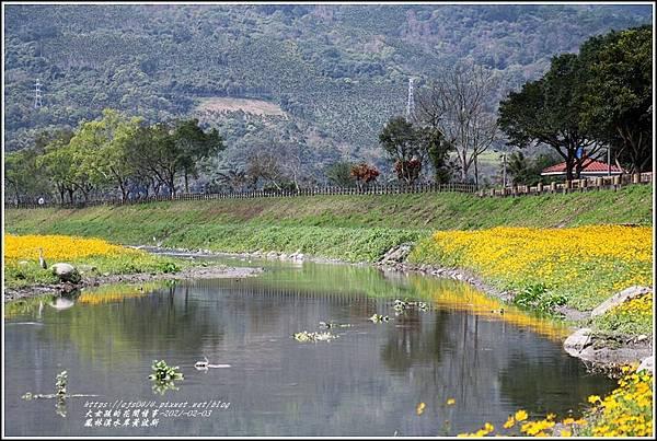 鳳林溪水岸黃波斯-2021-02-22.jpg