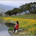 鳳林溪水岸黃波斯-2021-02-25.jpg