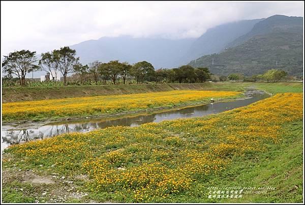 鳳林溪水岸黃波斯-2021-02-39.jpg