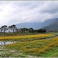 鳳林溪水岸黃波斯-2021-02-42.jpg