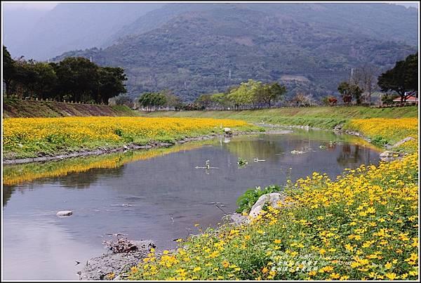 鳳林溪水岸黃波斯-2021-02-36.jpg
