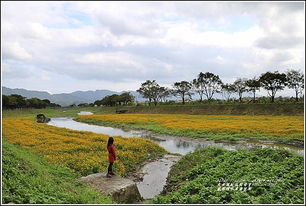 鳳林溪水岸黃波斯-2021-02-52.jpg