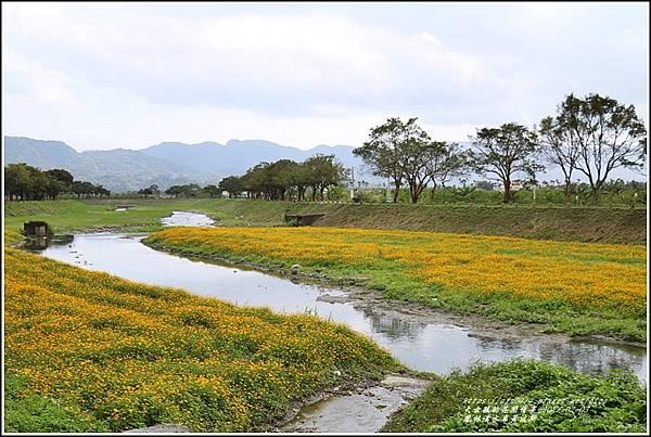 鳳林溪水岸黃波斯-2021-02-51.jpg