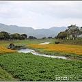 鳳林溪水岸黃波斯-2021-02-53.jpg