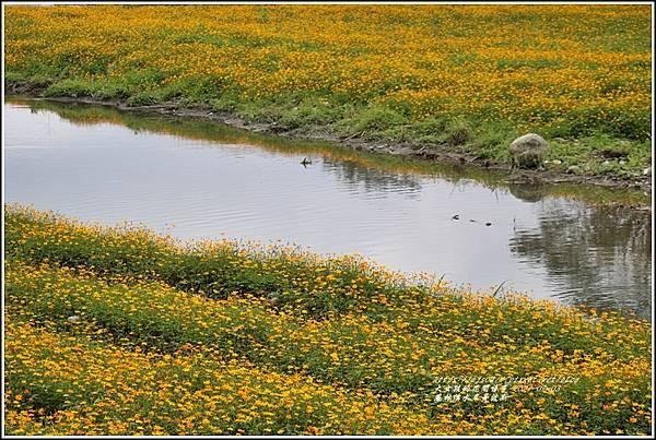 鳳林溪水岸黃波斯-2021-02-50.jpg