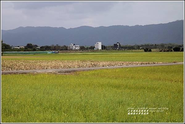 鳳林溪水岸黃波斯-2021-02-59.jpg