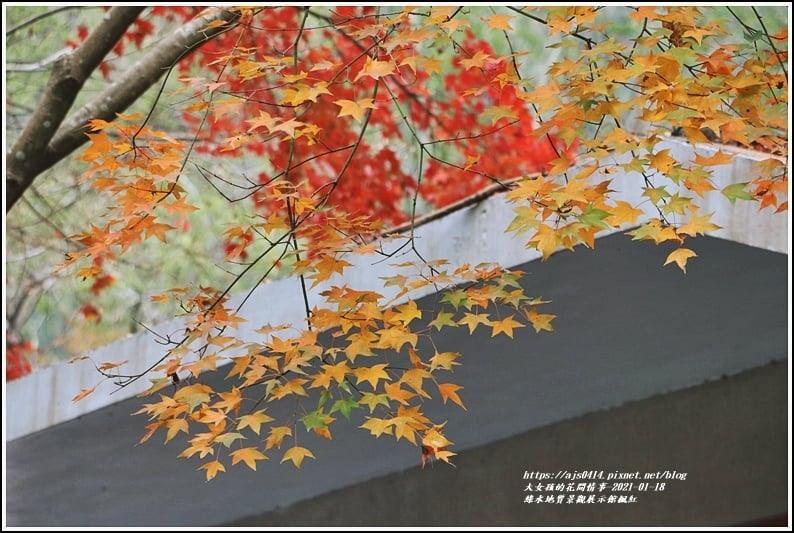 綠水地質館楓紅-2020-01-06.jpg
