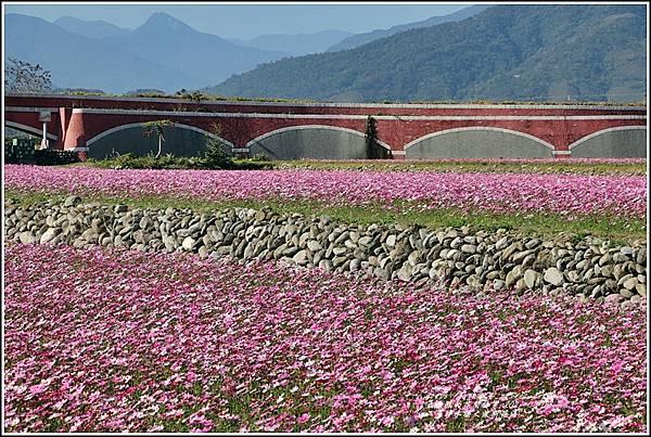 二層坪水橋大波斯花海-2021-02-14.jpg