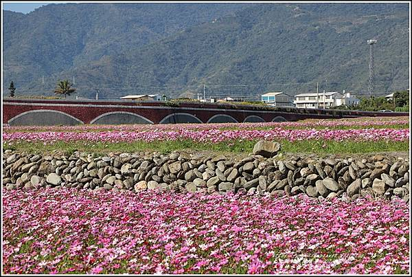 二層坪水橋大波斯花海-2021-02-17.jpg