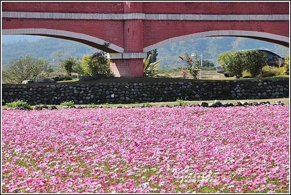 二層坪水橋大波斯花海-2021-02-72.jpg