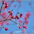 大加汗碧赫潭櫻花-2021-02-03.jpg