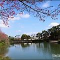 大加汗碧赫潭櫻花-2021-02-08.jpg