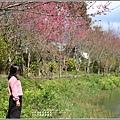 大加汗碧赫潭櫻花-2021-02-16.jpg