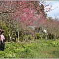 大加汗碧赫潭櫻花-2021-02-14.jpg