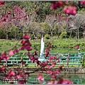 大加汗碧赫潭櫻花-2021-02-45.jpg