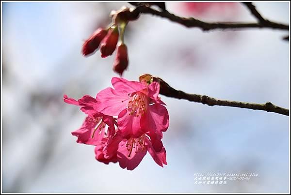 大加汗碧赫潭櫻花-2021-02-53.jpg