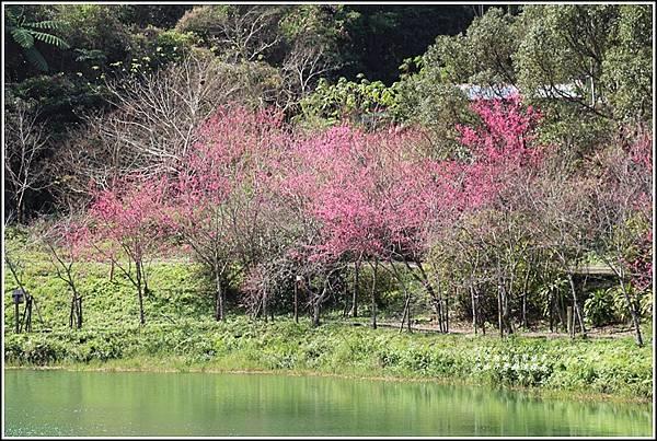 大加汗碧赫潭櫻花-2021-02-76.jpg