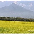 大農大富平地森林油菜花-2021-02-06.jpg