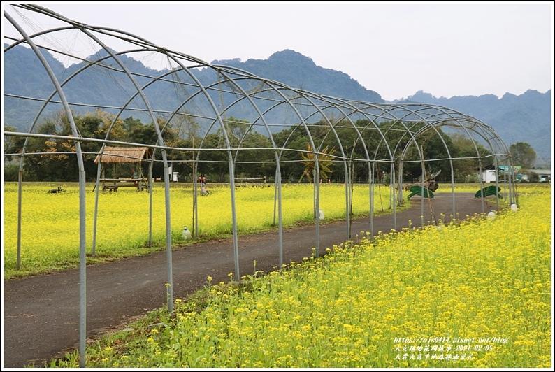 大農大富平地森林油菜花-2021-02-07.jpg