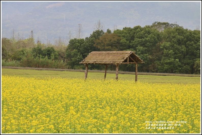 大農大富平地森林油菜花-2021-02-14.jpg