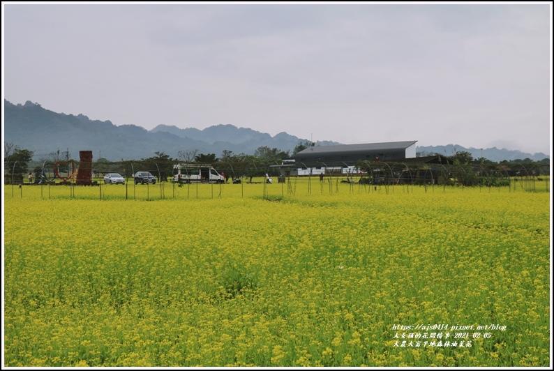 大農大富平地森林油菜花-2021-02-19.jpg