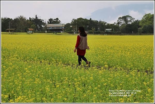 大農大富平地森林油菜花-2021-02-21.jpg