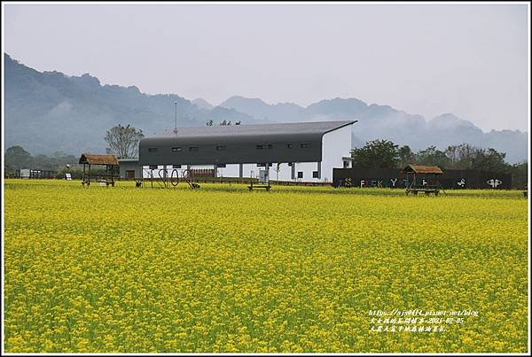 大農大富平地森林油菜花-2021-02-25.jpg