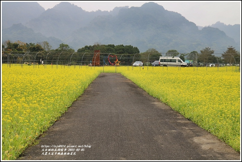 大農大富平地森林油菜花-2021-02-26.jpg