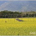 大農大富平地森林油菜花-2021-02-60.jpg