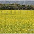 大農大富平地森林油菜花-2021-02-62.jpg