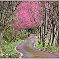 鳳林櫻花步道-2021-02-01.jpg