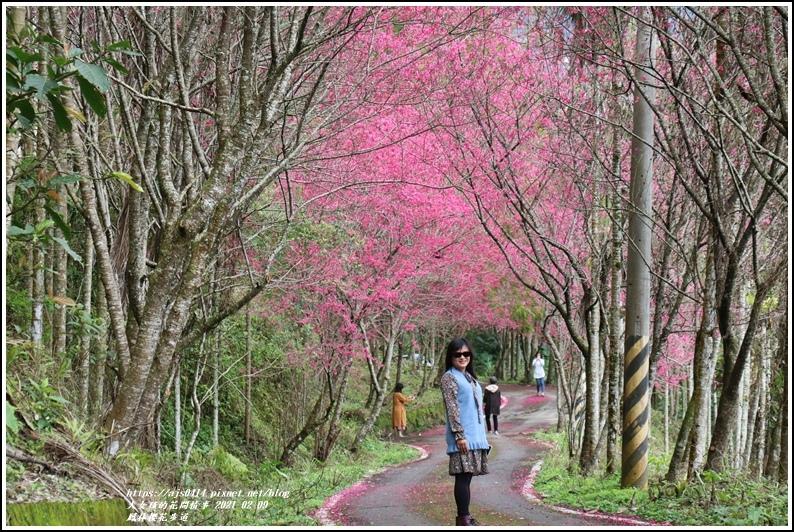 鳳林櫻花步道-2021-02-05.jpg