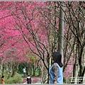 鳳林櫻花步道-2021-02-06.jpg