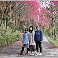 鳳林櫻花步道-2021-02-15.jpg