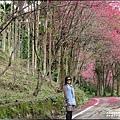 鳳林櫻花步道-2021-02-18.jpg