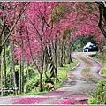 鳳林櫻花步道-2021-02-20.jpg