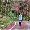 鳳林櫻花步道-2021-02-19.jpg