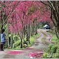 鳳林櫻花步道-2021-02-22.jpg