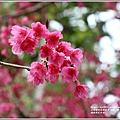 鳳林櫻花步道-2021-02-24.jpg