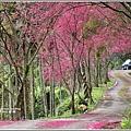 鳳林櫻花步道-2021-02-21.jpg