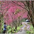 鳳林櫻花步道-2021-02-23.jpg