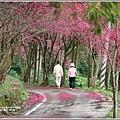 鳳林櫻花步道-2021-02-25.jpg