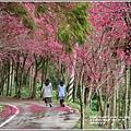 鳳林櫻花步道-2021-02-26.jpg