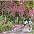 鳳林櫻花步道-2021-02-27.jpg
