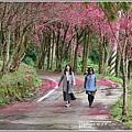 鳳林櫻花步道-2021-02-28.jpg
