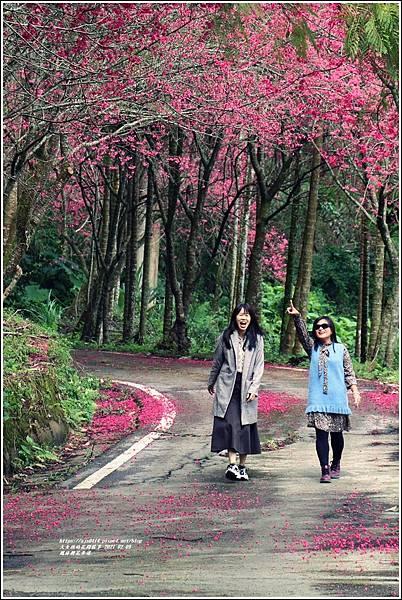 鳳林櫻花步道-2021-02-29.jpg